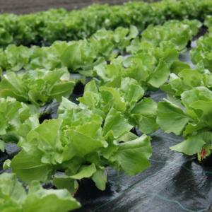Verzehrfertiges Gemüse und Salat